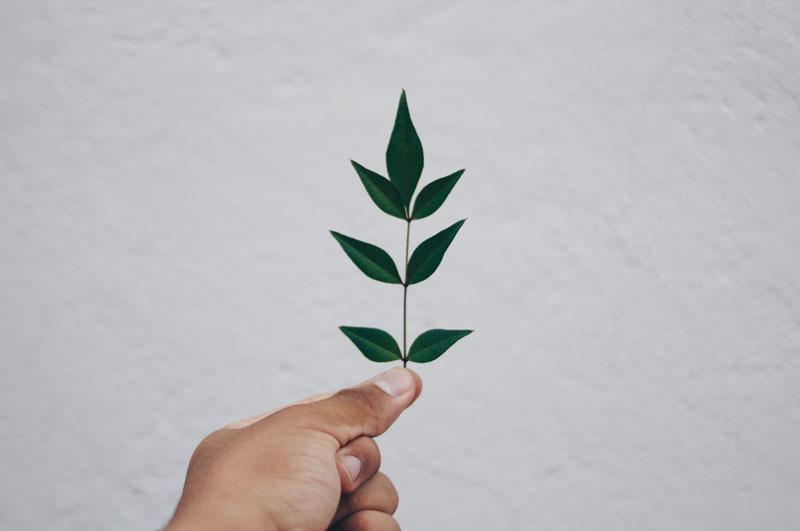 hand, fern, simplicity, you