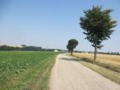 Tannenfeld09