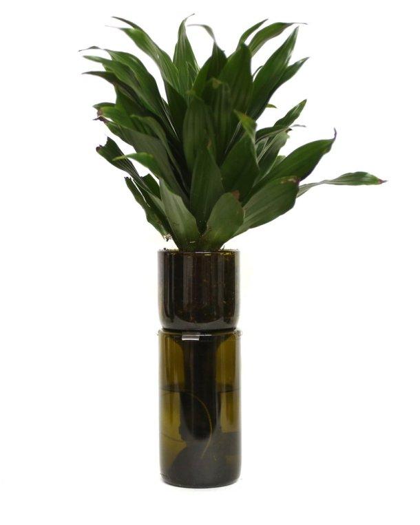 Refresh_Glass_Planter_Amber_01_1024x1024