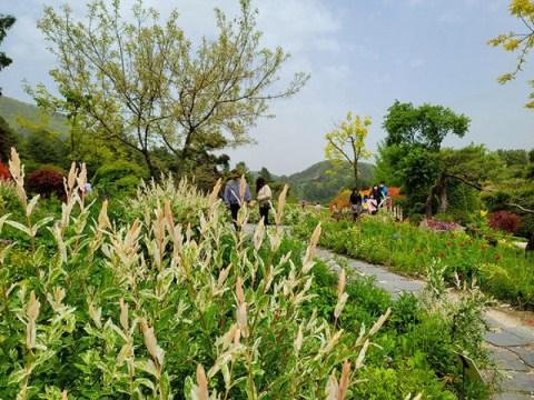 Daun lebih cantik dari bunga, tiga warna willow mekar penuh [holic perjalanan Reporter Choi Hyun-tae]