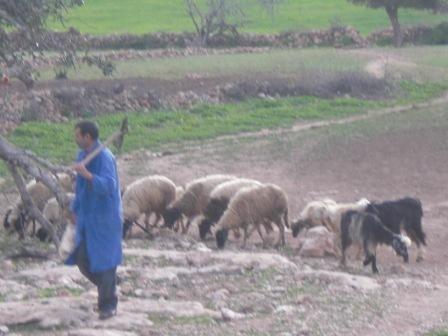 mouton4.JPG