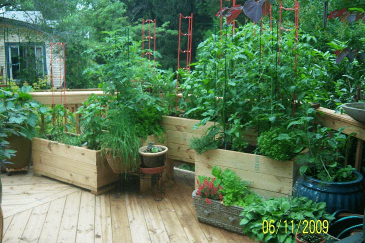 How Make Small Vegetable Garden