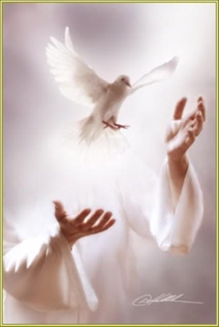 spirito-santo6