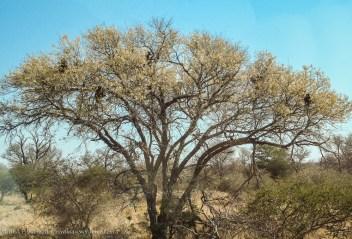 Sudafrica03 114