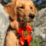 Miras BPH på Hundudden 📝