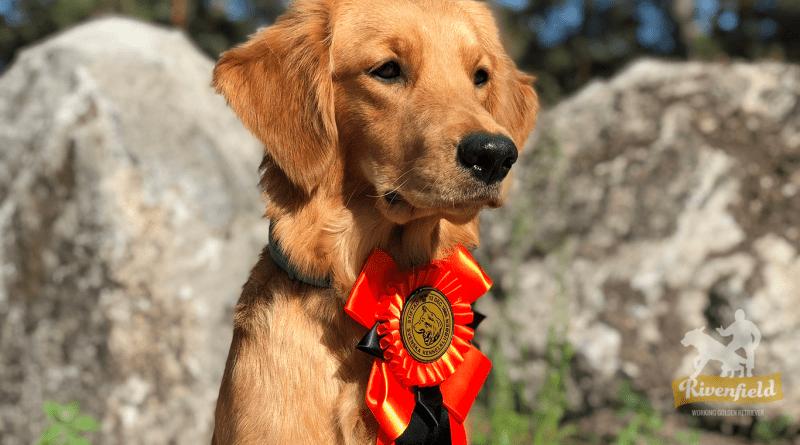 Mira på BPH, Hundudden