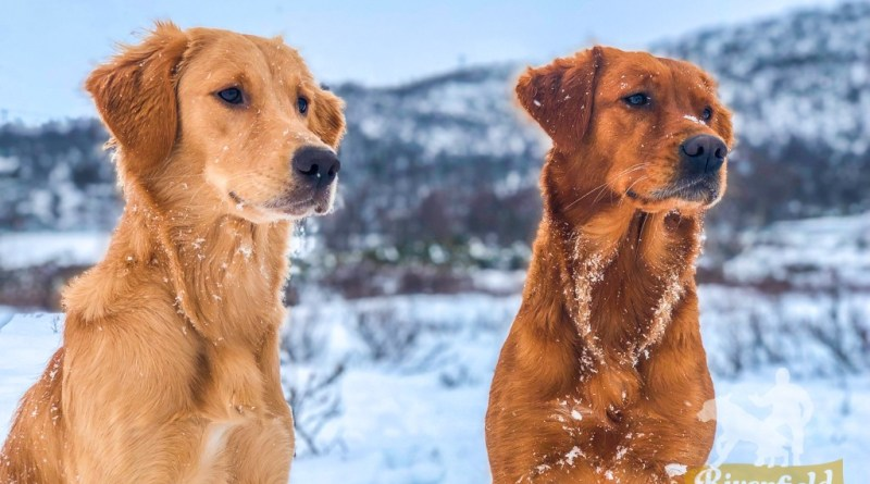 Isa & Nikki i Hardangervidda