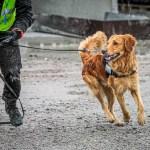 Att hålla räddningsträningen vid liv mitt i en kris