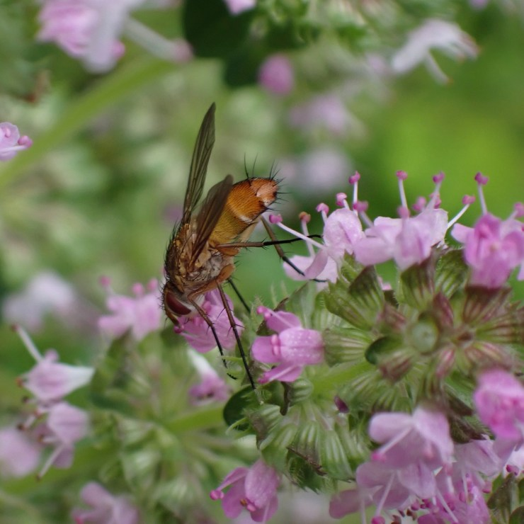 Tiny flies join a variety of pollinators on the homestead, at Riven Joiner & the Homestead Store.
