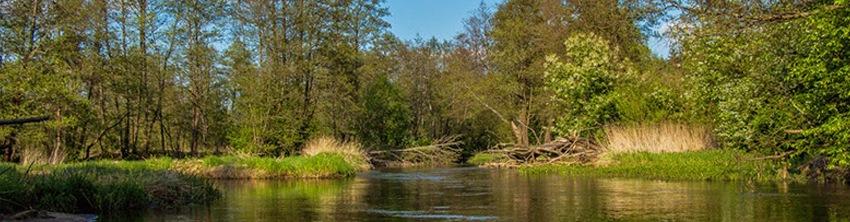 Водный поход по рекам Узлянка и Нарочанка