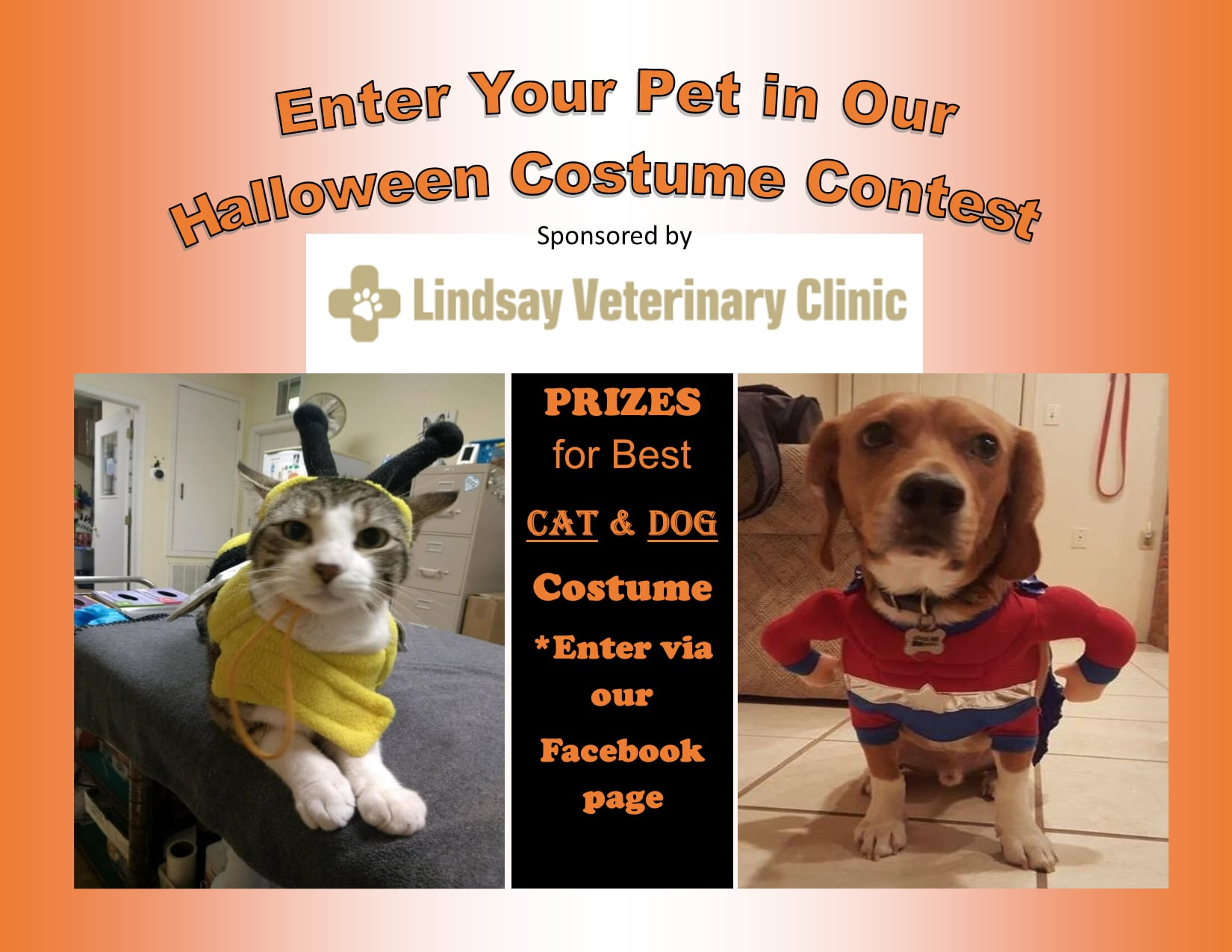 pet-costume-contest