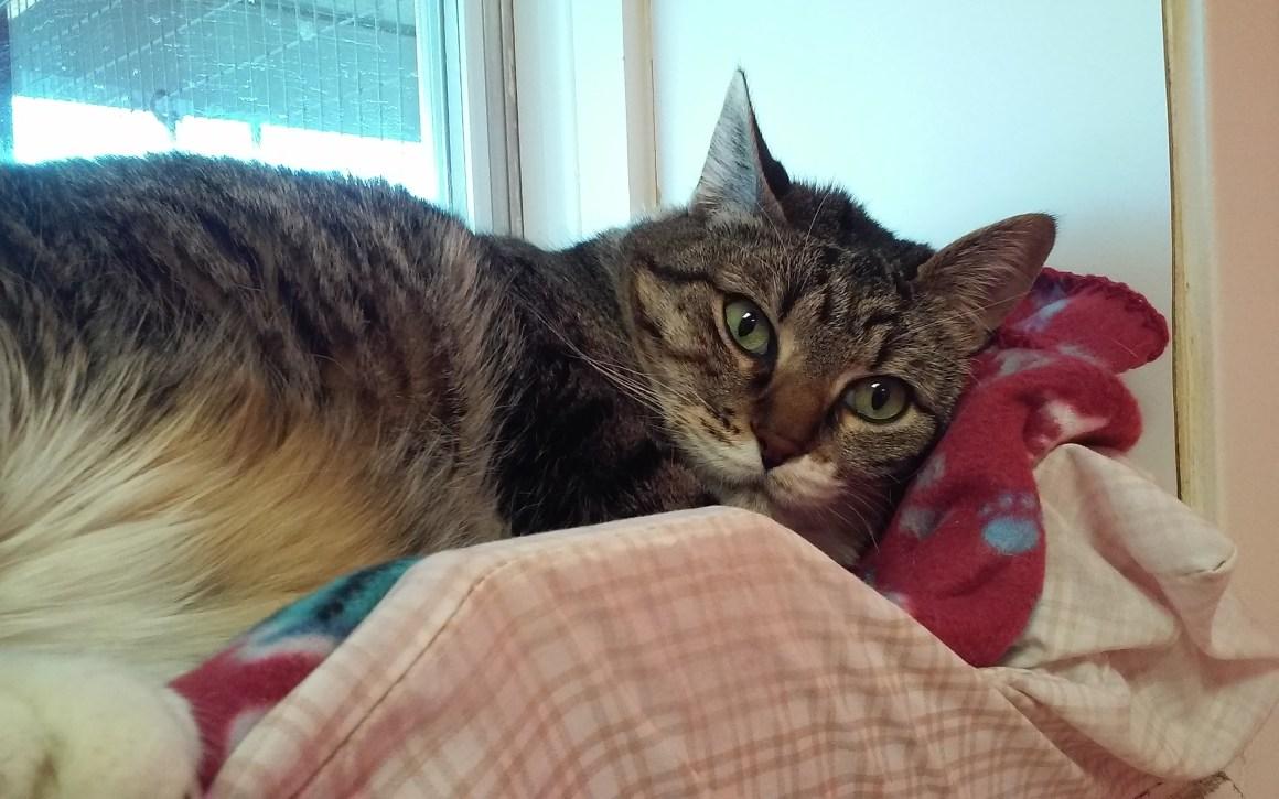 KittyKitty