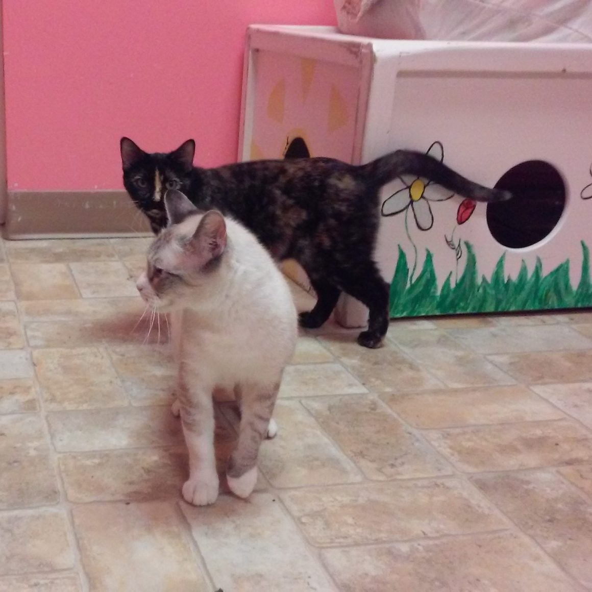 Annie and Sissy