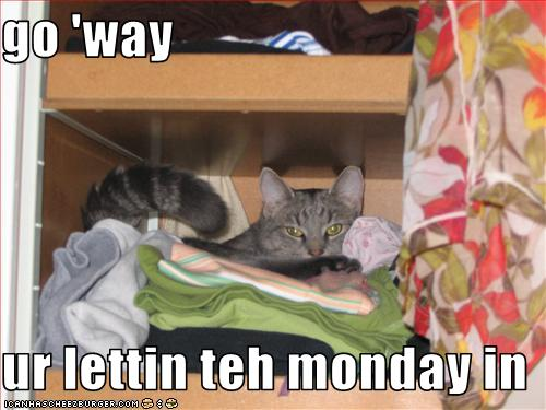 funny-pictures-cat-says-you-are-letting-the-monday-in