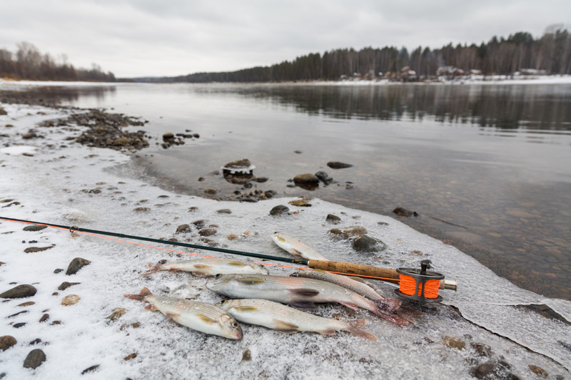 Can-I-Fly-Fish-During-Winter