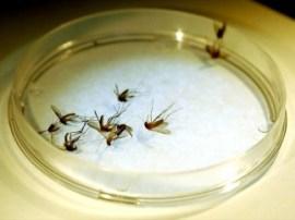 2012 0704 mosquito pool