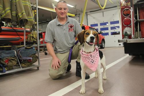 2013 1107 daisy fire dog