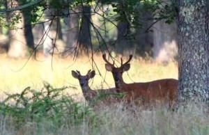 2013 1207 deer hunt
