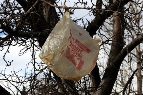2014_06_2014_0618_plastic_bag_in_tree