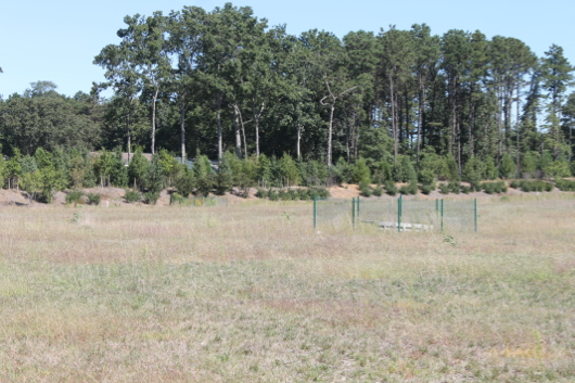 One of several fenced-off drainage structures on the vacant acreage behind the Costco parking lot. Photo: Denise Civiletti