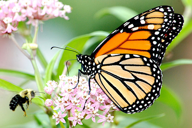 greg blass why the disappearance of butterfly species should worry