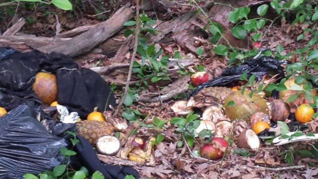 Decapitated goats and fruits and vegetables were discovered dumped in Calverton (courtesy photo)