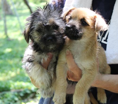 Puppies at the Calverton Shelter. (Credit: Courtesy Kent)