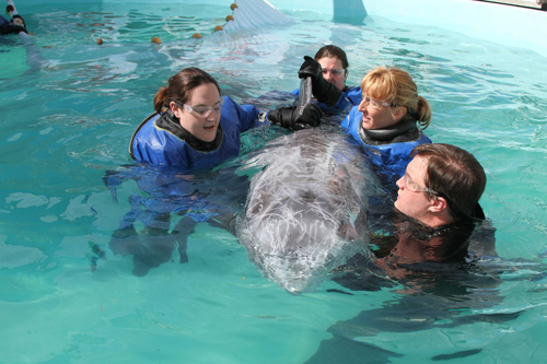 Riverhead Foundation Courtesy Photo | Roxanne and foundation volunteers during a physical at the Riverhead aquarium.