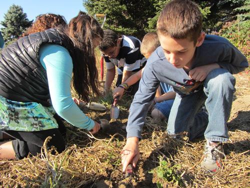 COURTESY PHOTO | Southold Elementary School students farming at