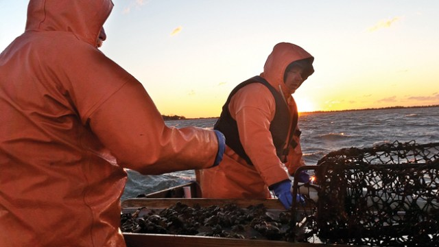 Gary Joyce of Aquebogue (left) and Ed Densieski of Riverhead sort through a catch. They said they often throw away more empty scallop shells than healthy keepers. (Credit: Carrie Miller)
