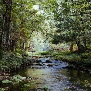September Digital Wellness Retreat