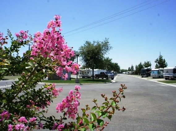Pretty flowers even in June!