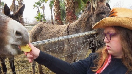 Sara feeds one of many burros at the farm.