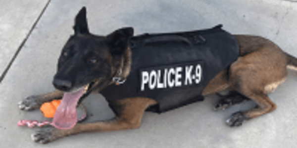 "MURRIETA: City's K-9 ""Pak"" receives donation of custom-fitted body armor"