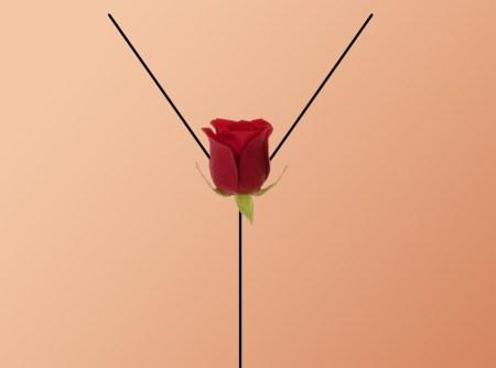 american_beauty_minimalist_poster_by_tchav-d54wu44