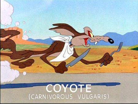Coyoteslate