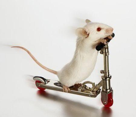 funny-mouse