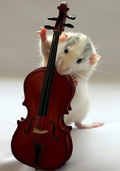 rat-bassist