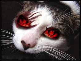 evil_cat_by_frodei-d3dyuv9