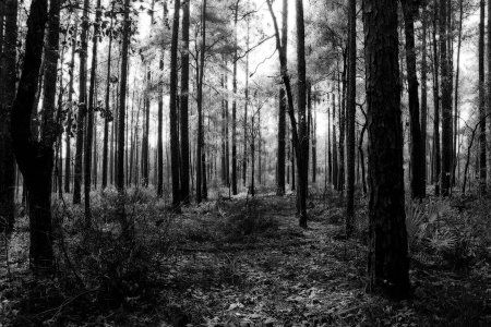 in_the_dark_woods_by_hunteroneroi-d4oy28m