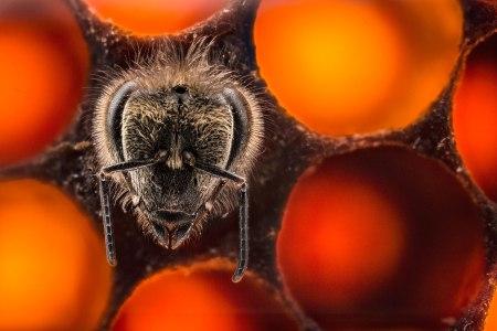 150513-varma-bees-04