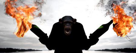 angry-chimp