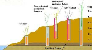 pole plant cross section edits
