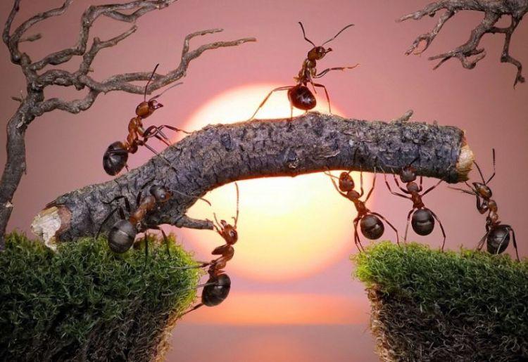 Contoh cerita seru kerjasama semut