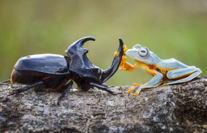 Gambar ciri ciri dari serangga kumbang