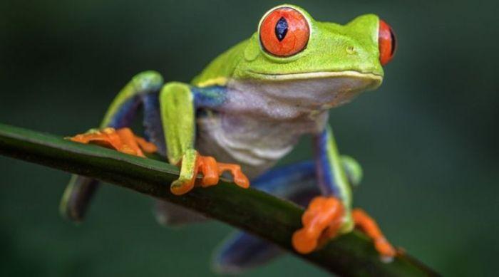 Manfaat adanya katak pada kehidupan