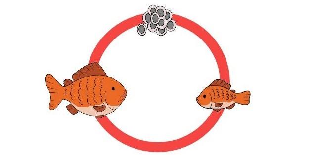 Ilustrasi siklus daur hidup ikan