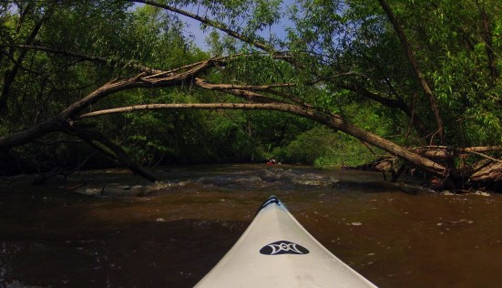 deadfall in the distance while on a kayak