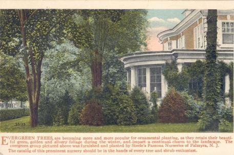 Steele's Pamona Nurseries, Palmyra, N.J.
