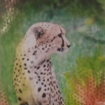 Meredyth Parrish Cheetah